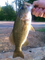 Smallmouth caught off Boatlaunch